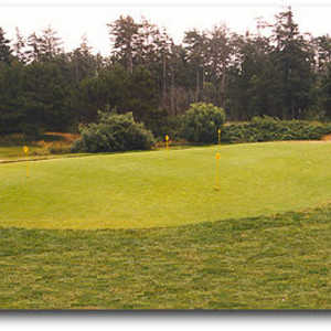 Manzanita Putting Green